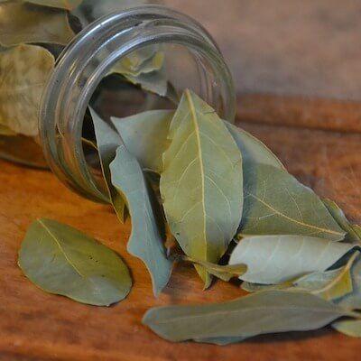Olivgrüne Lorbeerblätter im Glas